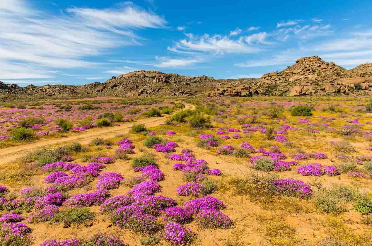 Những người yêu hoa nhất định phải tới 10 địa điểm này một lần trong đời