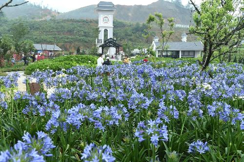 Du khách lên Fansipan ngắm hoa, săn mây mùa hè