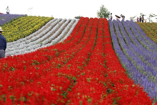 Thiên đường hoa đẹp mê li ở Nhật miễn phí vào cửa cho du khách