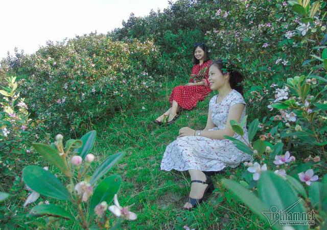 Đồi sim tím lịm bậc nhất xứ Nghệ: Dân teen đổ xô seo phì giữa nắng