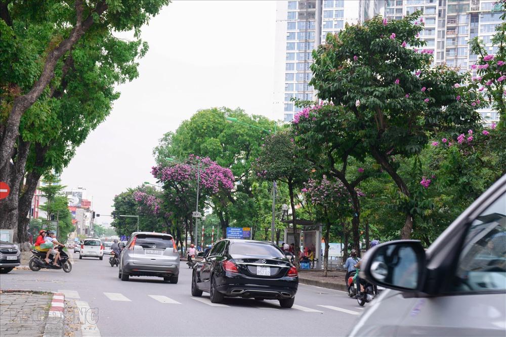 Mê mẩn ngắm sắc hoa trải dài trên khắp phố Hà Nội