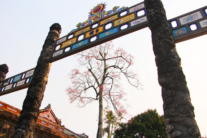 Hoa ngô đồng nở rộ trong Hoàng cung Huế