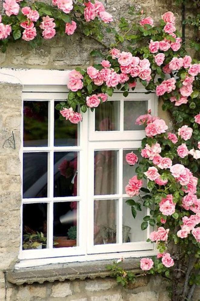 Những bức ảnh này sẽ cho bạn thấy, nhà chỉ cần một khóm hồng, bất kỳ góc nào cũng đều ngọt ngào