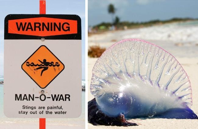 Cảnh báo: Những hiểm họa chết người không ngờ đến khi đi du lịch