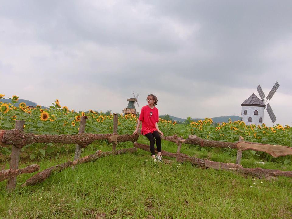 Giới trẻ phát sốt với vườn hoa hướng dương tại Bắc Giang