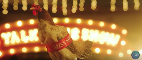 Bị chê hát như gà gáy, Chi Pu mang luôn con gà vào teaser MV mới Talk To Me