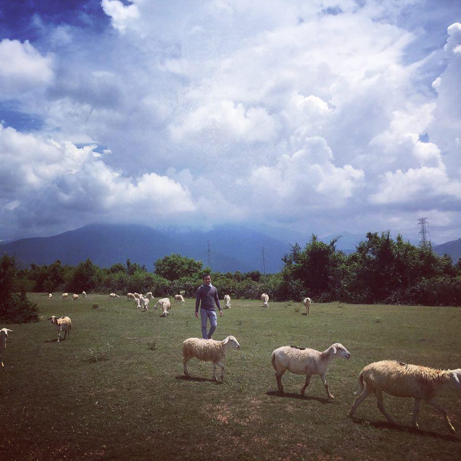 Khám phá 5 đồng cừu đẹp nhất Việt Nam dành cho hội sống ảo