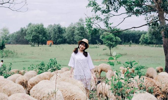 Khám phá 5 đồng cừu đẹp nhất Việt Nam dành cho hội 'sống ảo'
