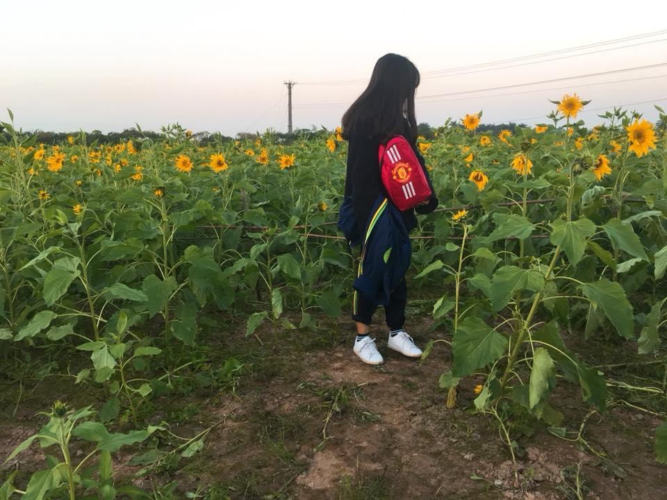 Bật mí kinh nghiệm khám phá khu vườn hoa hướng dương đẹp như mơ ngay đất Thủ đô