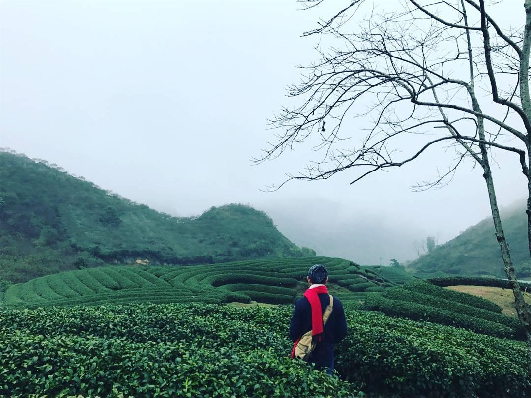 Xuyên Việt để check-in đủ 5 đồi chè đẹp nhất cả nước