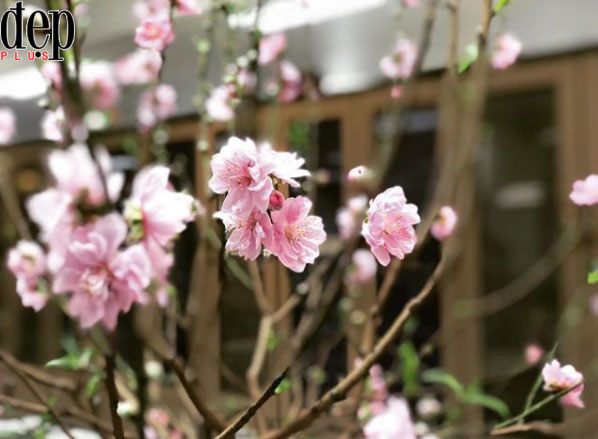 Những loại hoa nào nên cắm trên ban thờ ngày Tết?