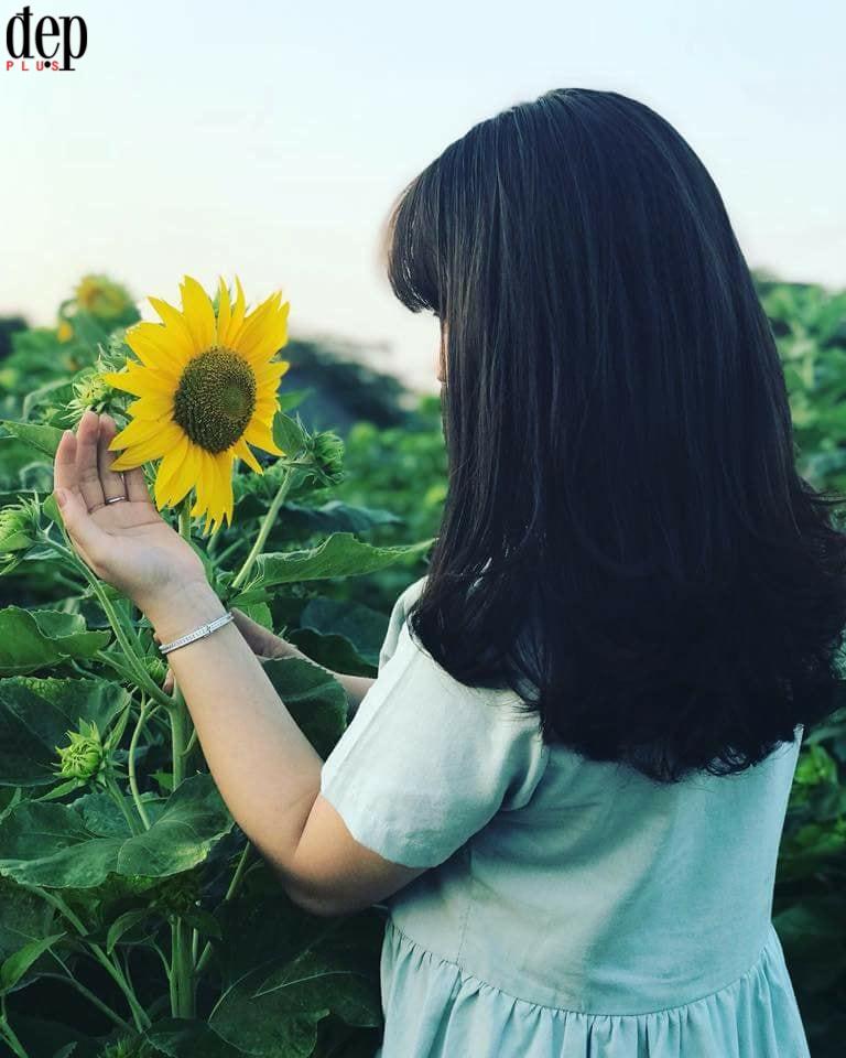 Khám phá vườn hoa hướng dương làm chao đảo giới trẻ An Giang dịp Tết Nguyên đán