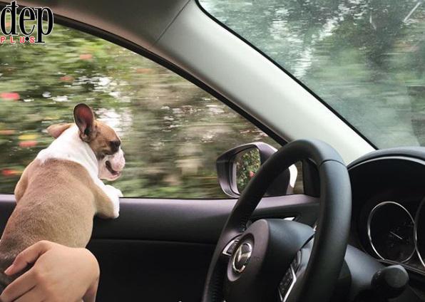 Những lưu ý để lái xe an toàn hơn trong dịp Tết