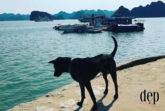 Bí mật về giống chó quý hiếm nhất Việt Nam: Cả thế giới chỉ có 800 con, mỗi con có giá cả trăm triệu