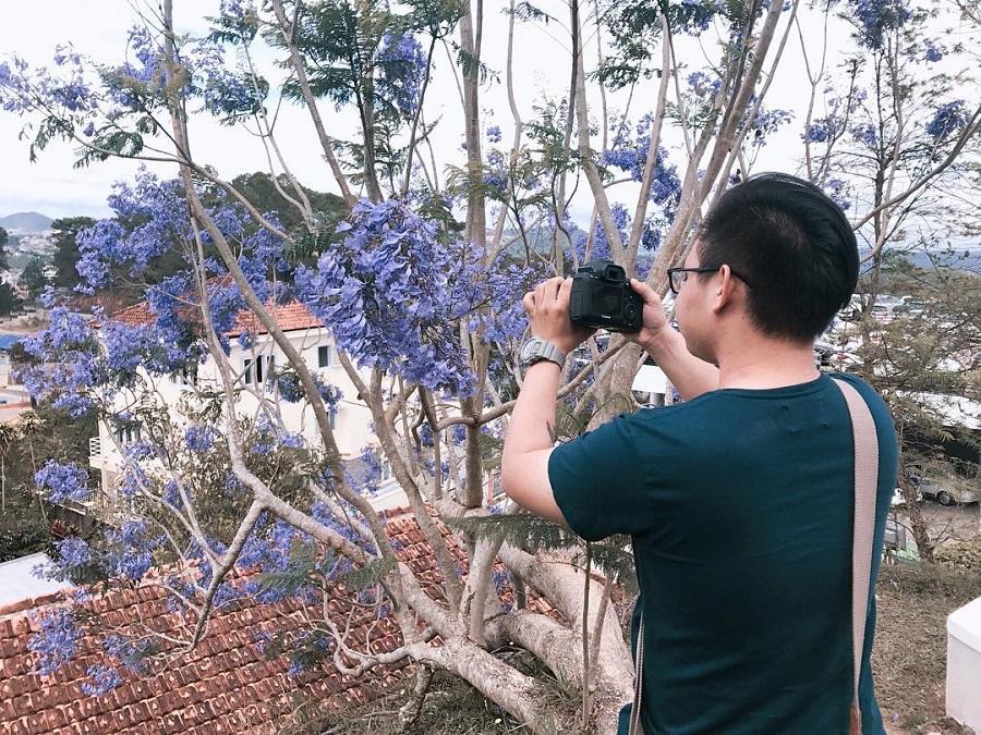 Xách vali lên Đà Lạt ngắm hoa phượng tím mộng mơ khi tháng 3 về