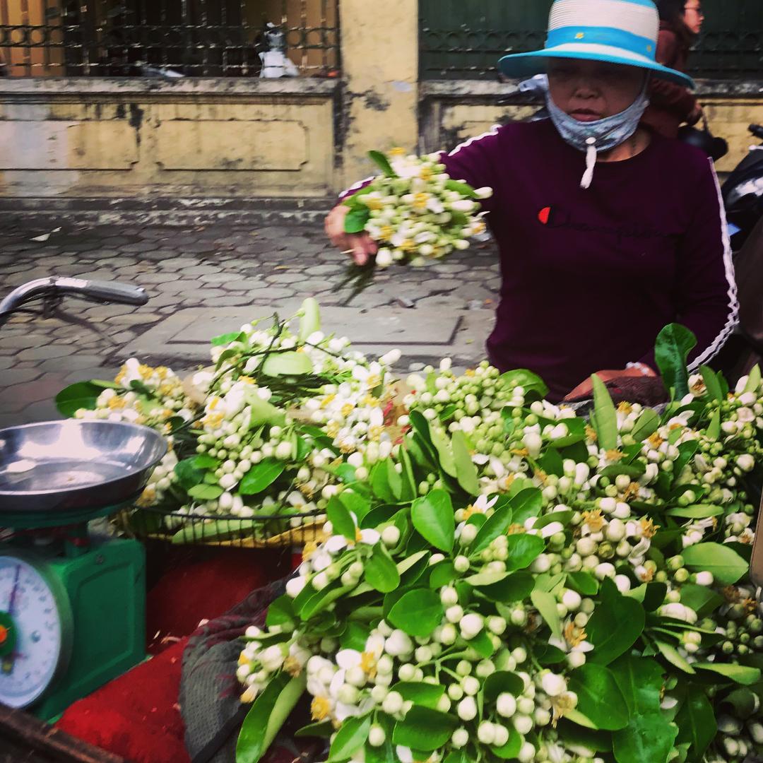 Chùm ảnh: Hoa bưởi mang tinh khôi đi muôn nẻo phố phường Hà Nội