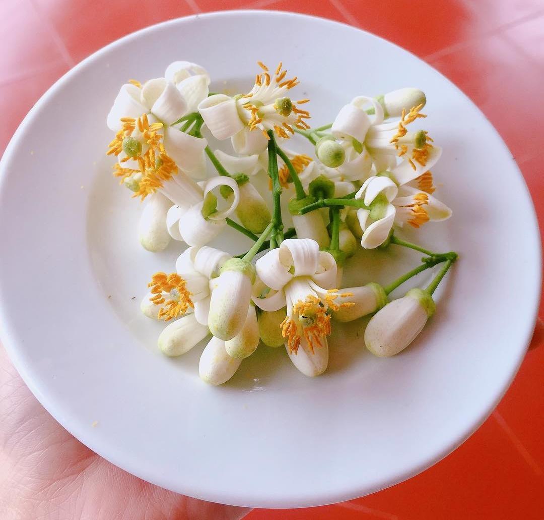 Hoa bưởi: Không đơn thuần chỉ là một loại hoa...