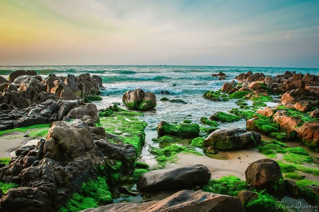 Lạc vào chốn tiên cảnh với mùa rêu biển Cổ Thạch - Bình Thuận