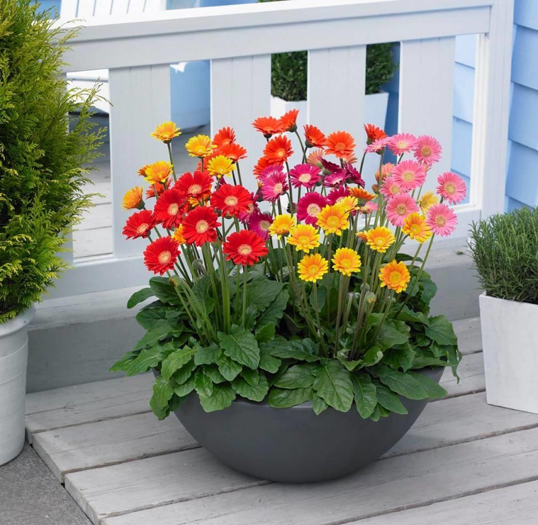 Đầu xuân trồng cây gì để cả năm may mắn phát tài?
