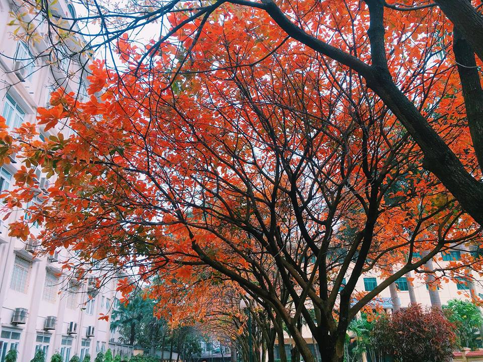Tháng 3 và những màu sắc gây thương nhớ của Hà Nội