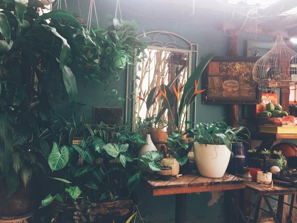 Chạy trốn mùa hè với 10 quán cà phê xanh mát giữa lòng Hà Nội (phần 1)
