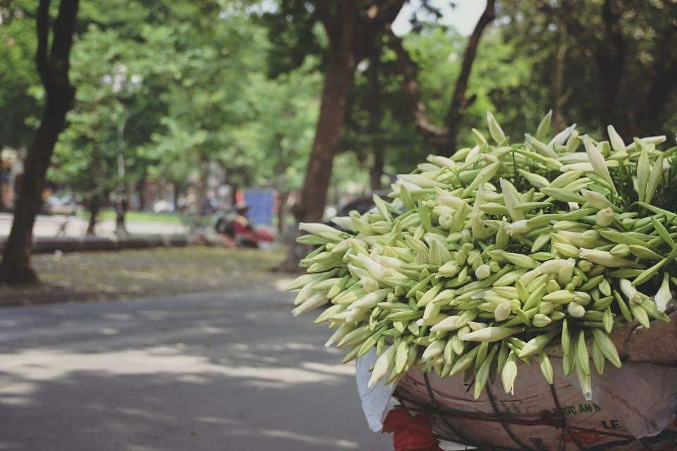 Hà Nội: Hoa loa kèn gọi tháng tư về...