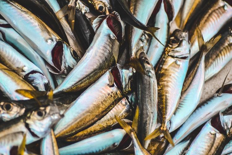 Tổng hợp những kinh nghiệm sơ chế hải sản mà người nội trợ nào cũng phải biết