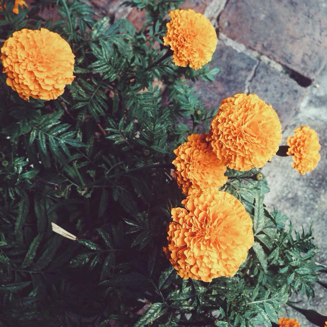 8 loại hoa tuyệt đối không được đặt lên bàn thờ