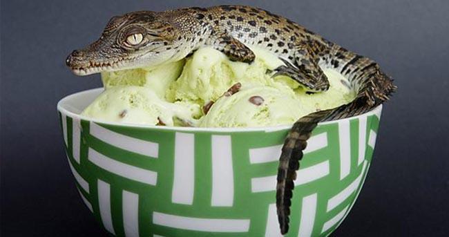 Đến Philippines đừng quên thưởng thức kem cá sấu, kem cá rô phi, kem ớt...