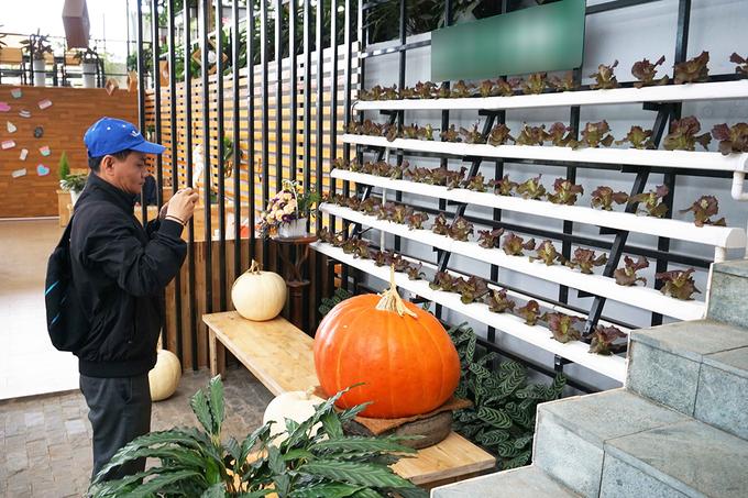 Trải nghiệm quán cà phê ngồi trong nhà kính trồng rau ở Đà Lạt