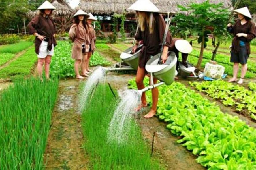 Về Quảng Nam thăm làng rau Trà Quế