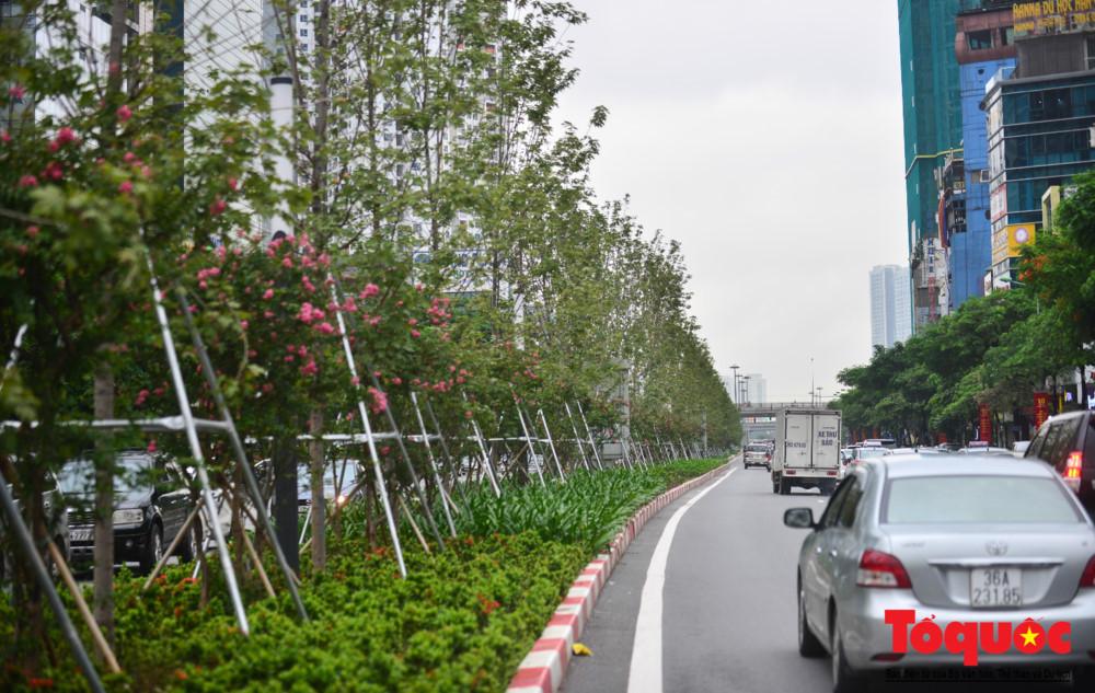 Không phải đi Châu Âu ngắm 'phong lá đỏ', những cây phong ở Hà Nội đã bắt đầu đổi mầu