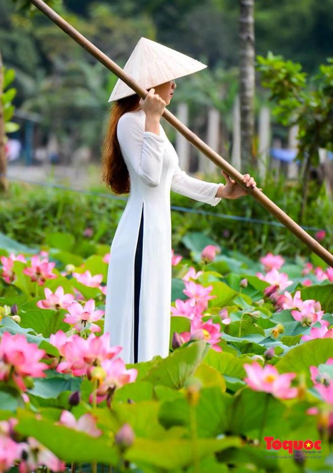 Thiếu nữ rực rỡ bên Sen mùa hạ
