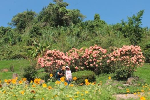 Vườn hoa hướng dương khiến chị em check-in rầm rầm