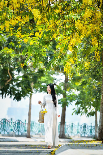 Hot girl bánh mướt xứ Nghệ khoe dịu dàng mùa hoa hoàng yến