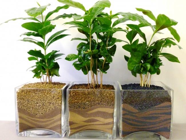 Mùa thu nên trồng những loại cây gì trong nhà để không khí luôn trong lành? - 2