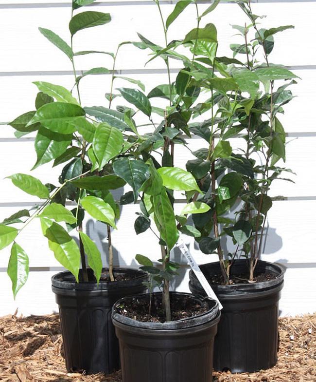 Mùa thu nên trồng những loại cây gì trong nhà để không khí luôn trong lành? - 3