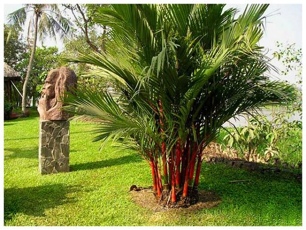 7 loại cây cảnh nếu trồng trước cửa nhà gia chủ có thể yên tâm hưởng phúc