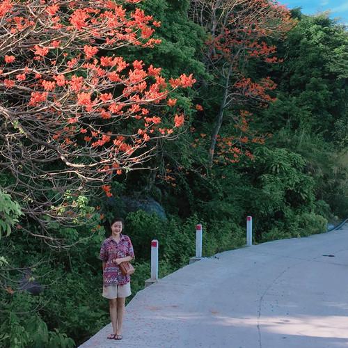 Rủ nhau đến Cù Lao Chàm ngắm hoa ngô đồng nhuộm đỏ đảo xanh