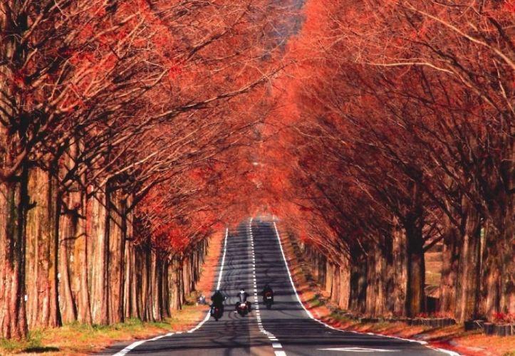 Những chuyến du lịch mùa thu sao có thể bỏ lỡ những điểm đến lãng mạn nhất châu Á này