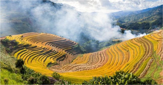 Sắc thu rực rỡ trong mùa vàng ở Mù Cang Chải