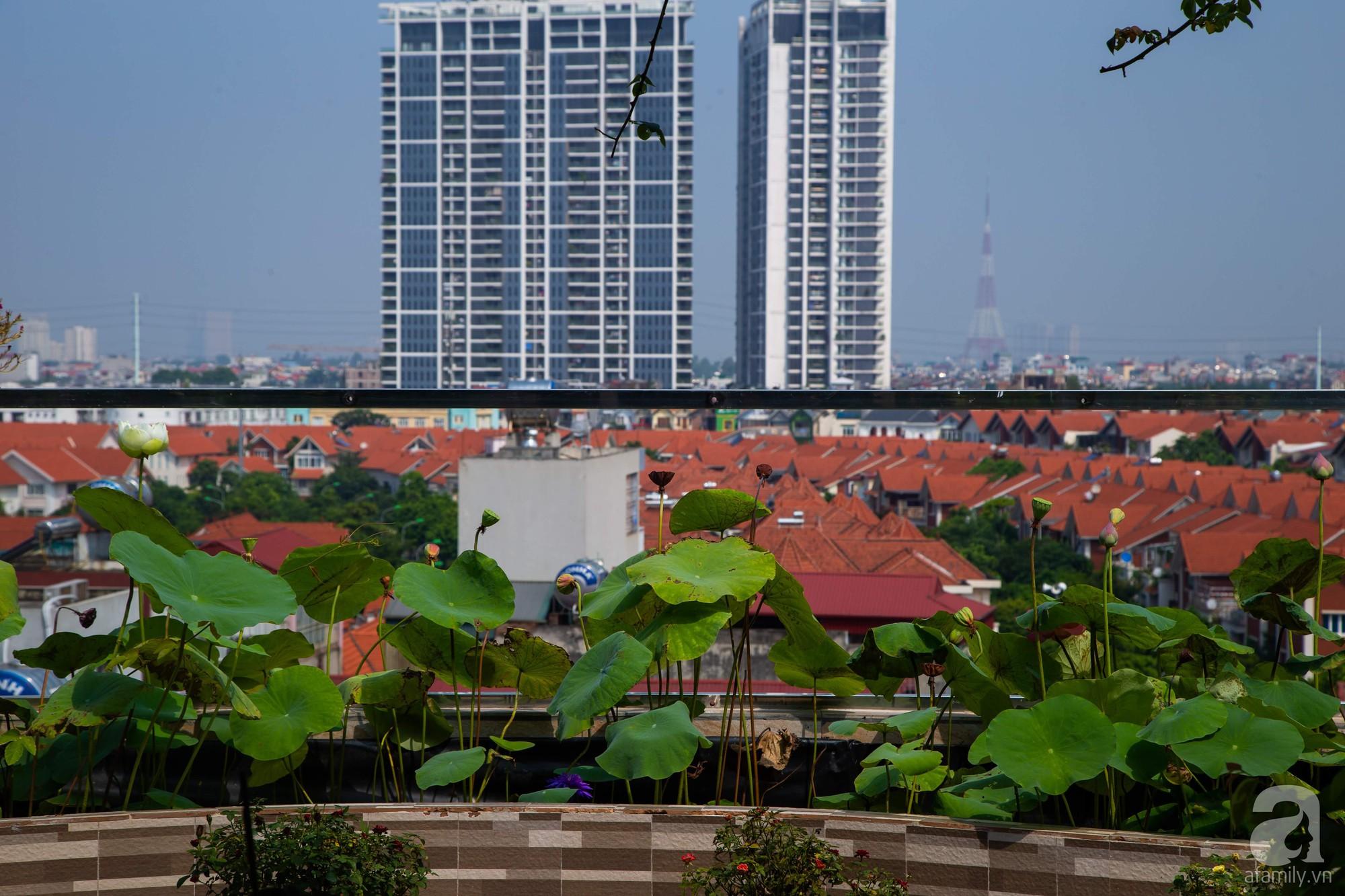 Khu vườn trên sân thượng rộng 200m² đẹp ngỡ ngàng với trăm loài hoa đua nhau khoe sắc ở Hà Nội - 13