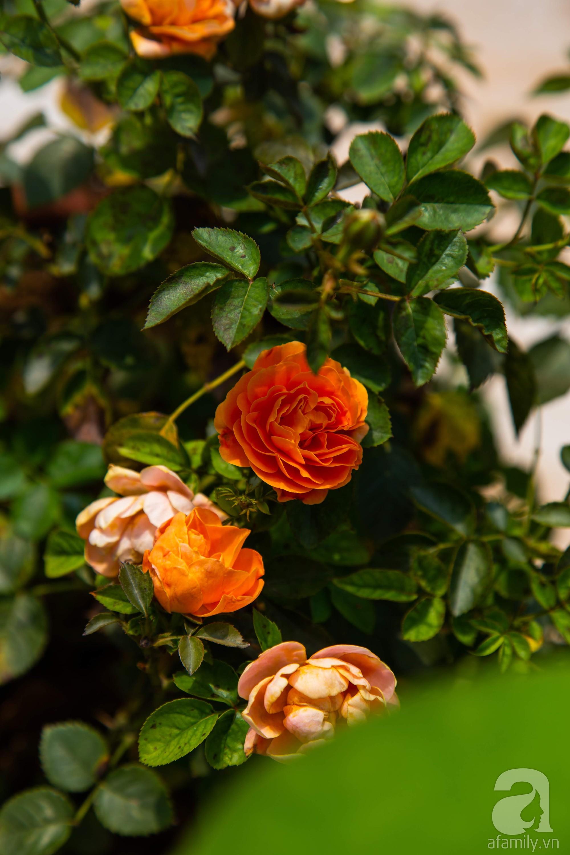 Khu vườn trên sân thượng rộng 200m² đẹp ngỡ ngàng với trăm loài hoa đua nhau khoe sắc ở Hà Nội - 17