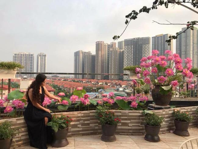 Khu vườn trên sân thượng rộng 200m² đẹp ngỡ ngàng với trăm loài hoa đua nhau khoe sắc ở Hà Nội - 1