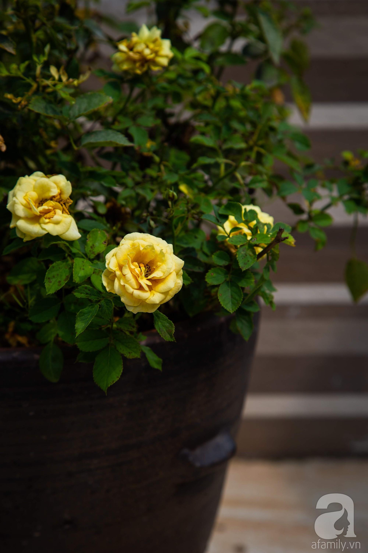 Khu vườn trên sân thượng rộng 200m² đẹp ngỡ ngàng với trăm loài hoa đua nhau khoe sắc ở Hà Nội - 18
