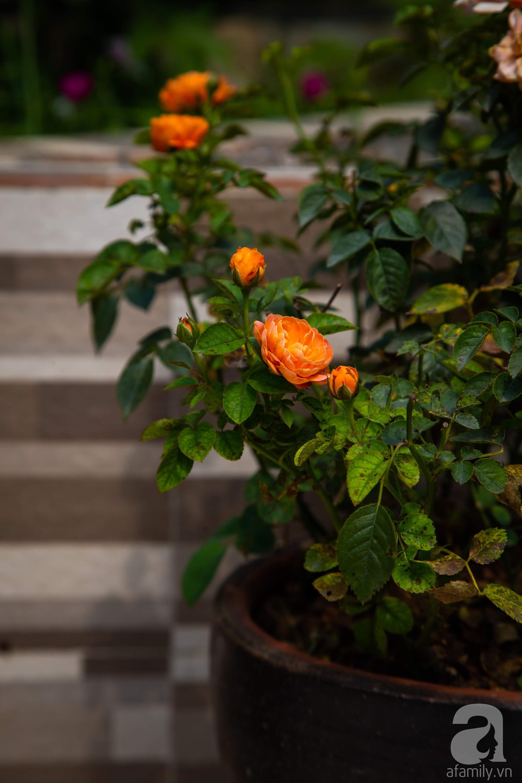 Khu vườn trên sân thượng rộng 200m² đẹp ngỡ ngàng với trăm loài hoa đua nhau khoe sắc ở Hà Nội - 19