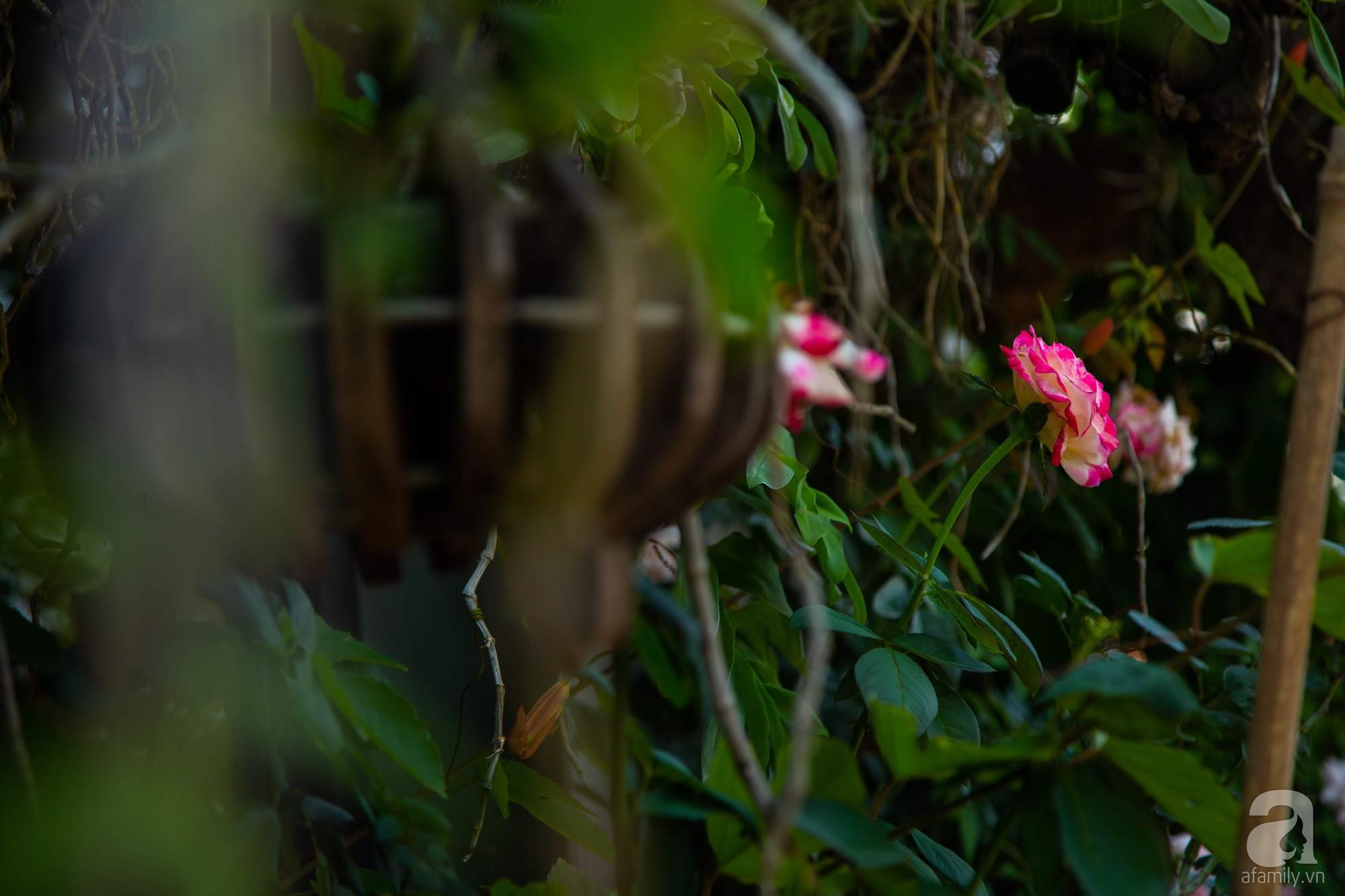 Khu vườn trên sân thượng rộng 200m² đẹp ngỡ ngàng với trăm loài hoa đua nhau khoe sắc ở Hà Nội - 20