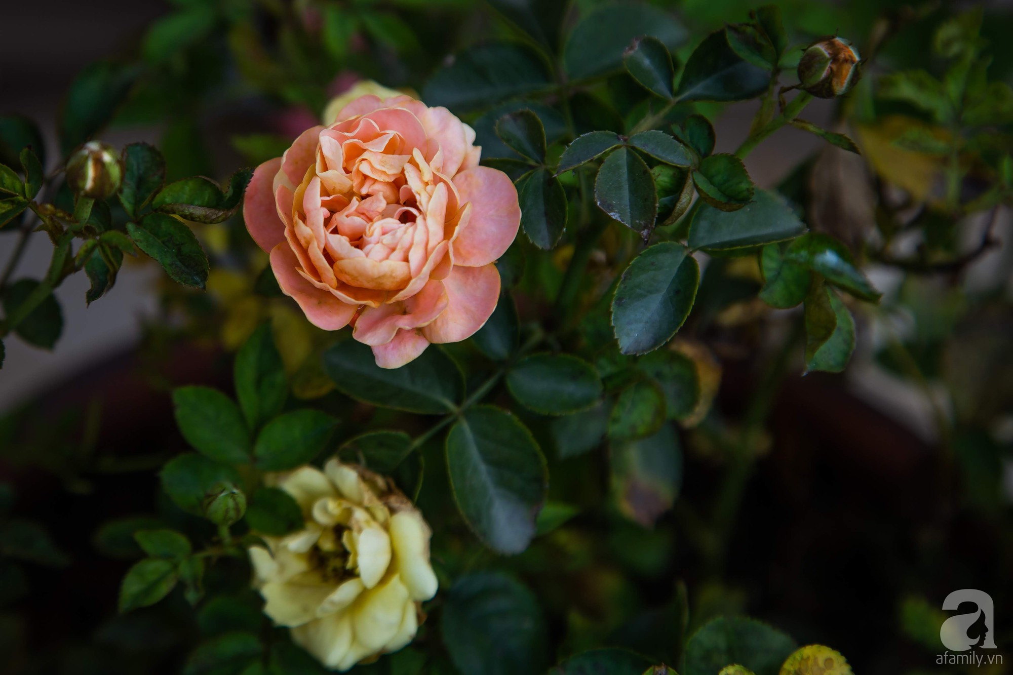Khu vườn trên sân thượng rộng 200m² đẹp ngỡ ngàng với trăm loài hoa đua nhau khoe sắc ở Hà Nội - 21