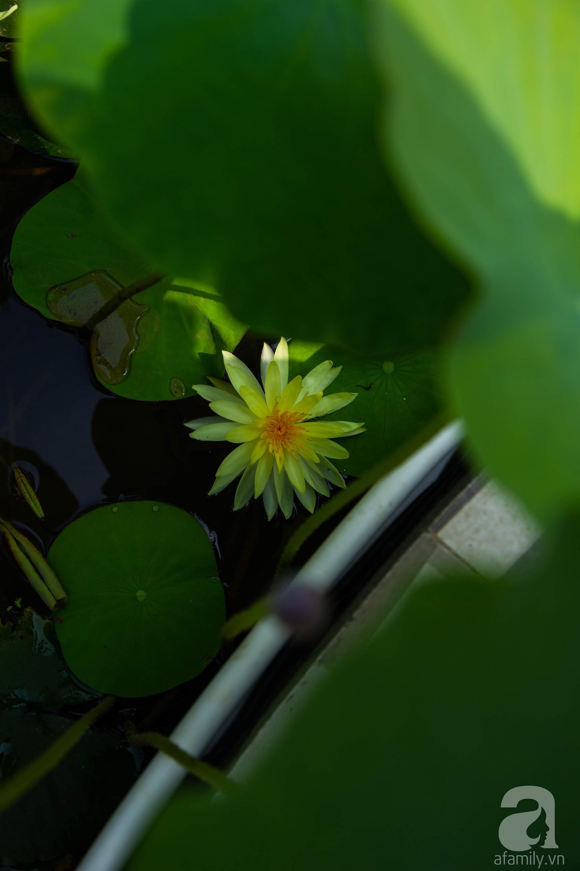 Khu vườn trên sân thượng rộng 200m² đẹp ngỡ ngàng với trăm loài hoa đua nhau khoe sắc ở Hà Nội - 22