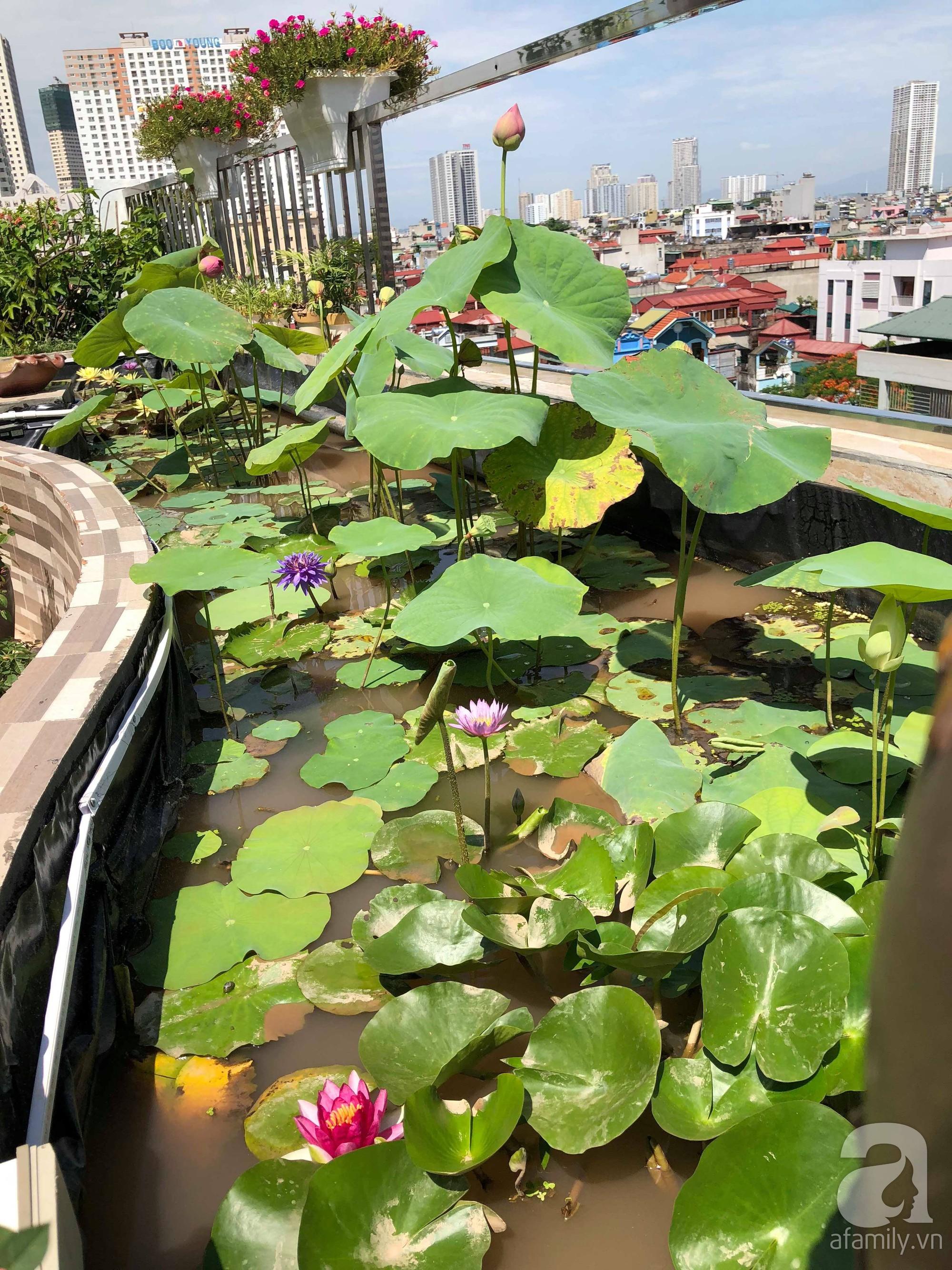 Khu vườn trên sân thượng rộng 200m² đẹp ngỡ ngàng với trăm loài hoa đua nhau khoe sắc ở Hà Nội - 24